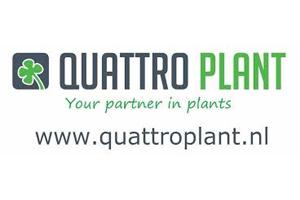 Quattro Plant